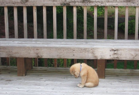 lonely-puppy